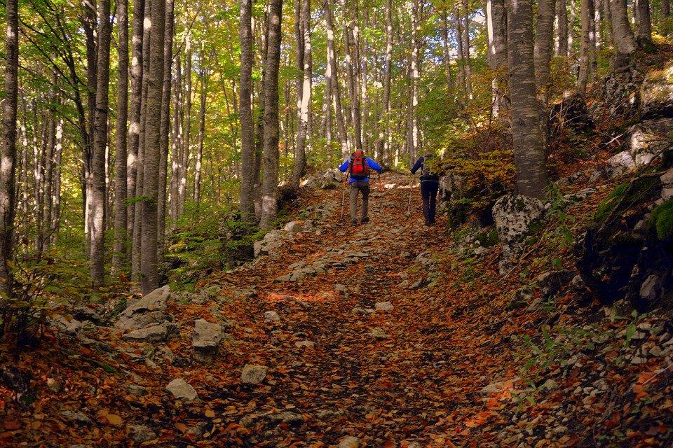 Excursion, Forêt, Automne, Sentier, Trekking